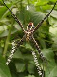 Web spider images stock