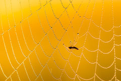 Web of a spider against sunrise in the misty meadow. Stock Photos