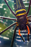 Web spider d'or de globe Photo libre de droits