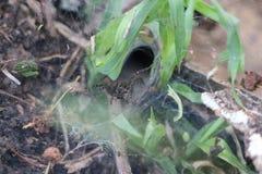 Web spider d'entonnoir protégeant son Web photo stock