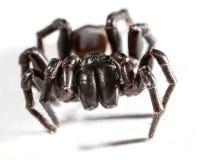 Web spider de embudo Foto de archivo libre de regalías
