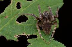Web spider de globe Photos stock