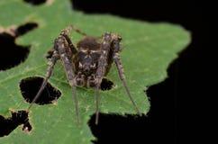 Web spider de globe Image stock