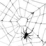 Web spider de Grunge Imagen de archivo