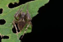 Web spider de orbe imagen de archivo
