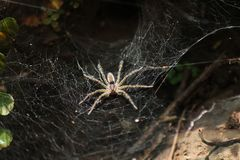 Web spider del túnel fotos de archivo
