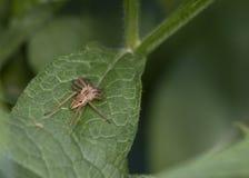 Web spider della scuola materna fotografie stock