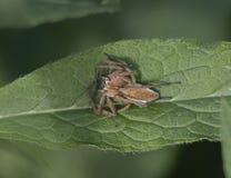 Web spider della scuola materna immagini stock libere da diritti