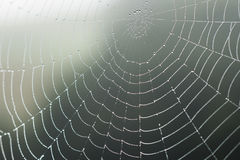 Web of spider with dew Royalty Free Stock Photos