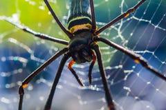 Web spider dorato del globo Fotografie Stock Libere da Diritti