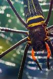 Web spider dorato del globo Fotografia Stock Libera da Diritti