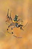 Web spider dorato del globo Immagini Stock Libere da Diritti