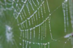 Web Stock Photo