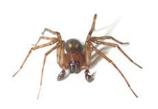Web spider isolated on white background Stock Photos