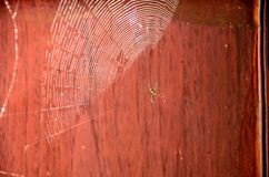Web Spider Royalty Free Stock Images