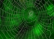 Web spider with water drops. In the nature stock image
