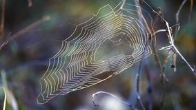 The web spider at wind stock video footage