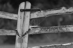 Web Stock Photography