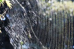 Spider web. A web of spiders shining in the light in the forest. Spider, you are a wonderful artist stock photo