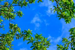 Web spring jungle frame banner. Green leaves against blue white sky and white clouds. Sunlight coming through. Realistic picture stock photo