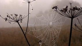 Web su vento