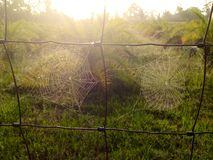 Web Sunrise Stock Photo
