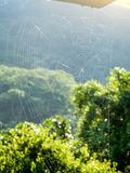The web on the sunshine. The spider webs on the sunshine Stock Photos