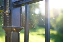 Web on sunshine. Royalty Free Stock Image