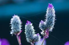 Web sur des fleurs Image stock
