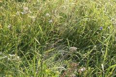 Web sur l'herbe dans les baisses de la rosée image stock