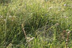 Web sur l'herbe dans les baisses de la rosée photo stock