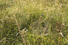 Web sur l'herbe dans les baisses de la rosée photographie stock libre de droits