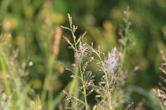 Web sur l'herbe dans les baisses de la rosée image libre de droits