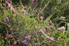 Web sur l'herbe dans les baisses de la rosée photos libres de droits
