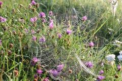 Web sur l'herbe dans les baisses de la rosée photo libre de droits