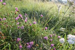 Web sur l'herbe dans les baisses de la rosée photos stock