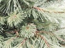 Web sur le pin Photo libre de droits