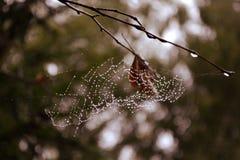 Web sur les branches dans la rosée d'une forêt brumeuse photo libre de droits