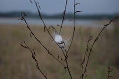 Web sur une mauvaise herbe Photographie stock libre de droits