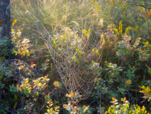 Web in the swamp Stock Photo