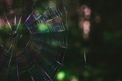Web terrible en el bosque foto de archivo
