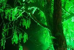 Web on a tree and night illumination Stock Photos