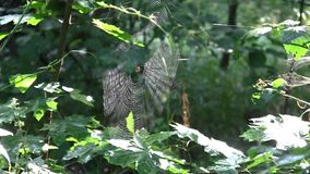 A web among the trees in the forest. The sun`s rays make their way through the web stock video footage