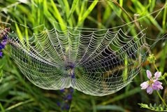 Web van de spin en de dauw Stock Afbeeldingen