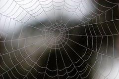 Web van parels ook Stock Fotografie