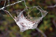 Web vazia na árvore imagem de stock royalty free