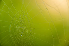The web with water drops Royalty Free Stock Photos