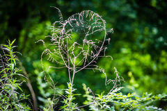 Web and Weeds Royalty Free Stock Photo