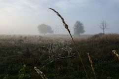 Free Web With Brillyantami Water Misty Morning Stock Photography - 104307412