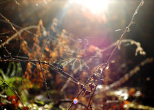 Web in the woods. Image of a web in a dark wood backlit with sunlight Stock Images